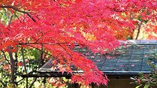 p_shirotori-garden